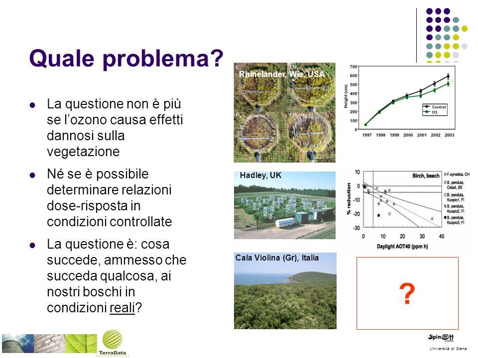 Quale problema? La questione non è più se lozono causa effetti dannosi sulla vegetazione Né se è possibile determinare relazioni dose-risposta in cond