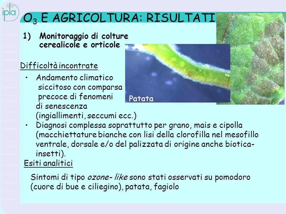 O 3 E AGRICOLTURA: RISULTATI 1)Monitoraggio di colture cerealicole e orticole Esiti analitici Difficoltà incontrate Andamento climatico siccitoso con comparsa precoce di fenomeni di senescenza (ingiallimenti, seccumi ecc.) Diagnosi complessa soprattutto per grano, mais e cipolla (macchiettature bianche con lisi della clorofilla nel mesofillo ventrale, dorsale e/o del palizzata di origine anche biotica- insetti).