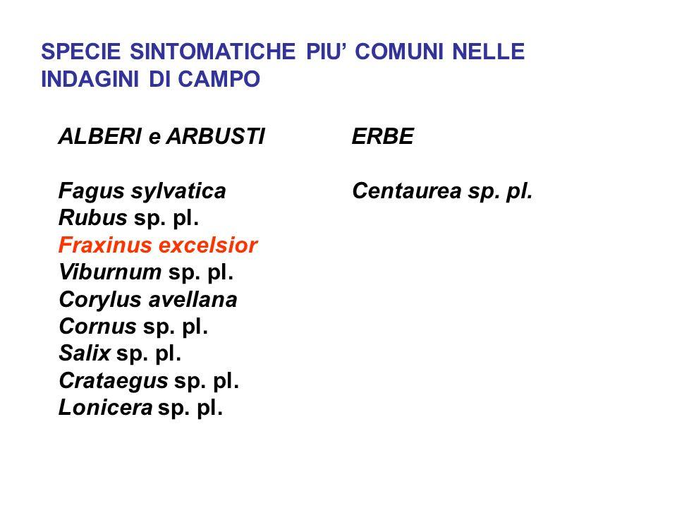 SPECIE SINTOMATICHE PIU COMUNI NELLE INDAGINI DI CAMPO ALBERI e ARBUSTI Fagus sylvatica Rubus sp.