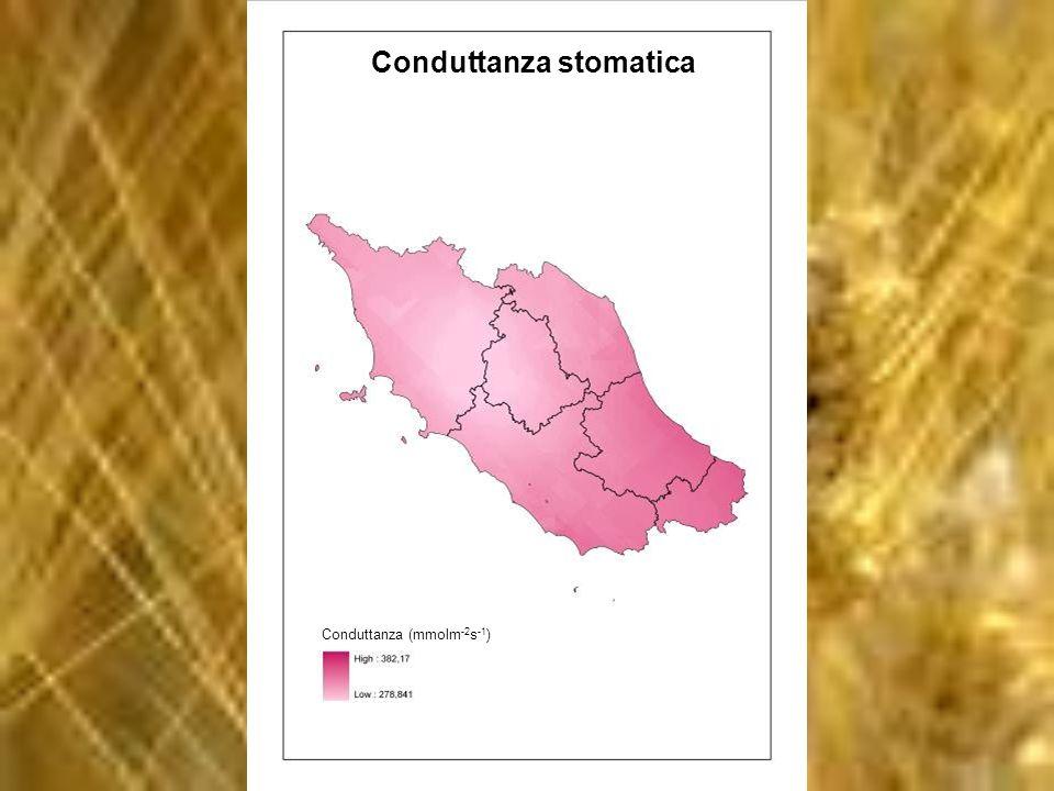 Conduttanza stomatica Conduttanza (mmolm -2 s -1 )