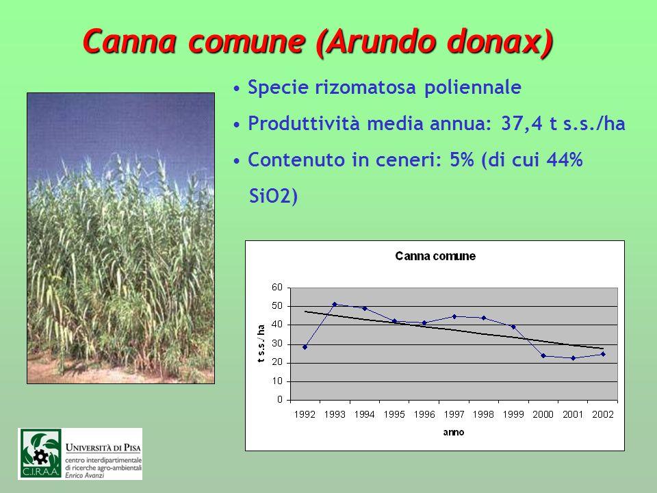 Canna comune (Arundo donax) Specie rizomatosa poliennale Produttività media annua: 37,4 t s.s./ha Contenuto in ceneri: 5% (di cui 44% SiO2)