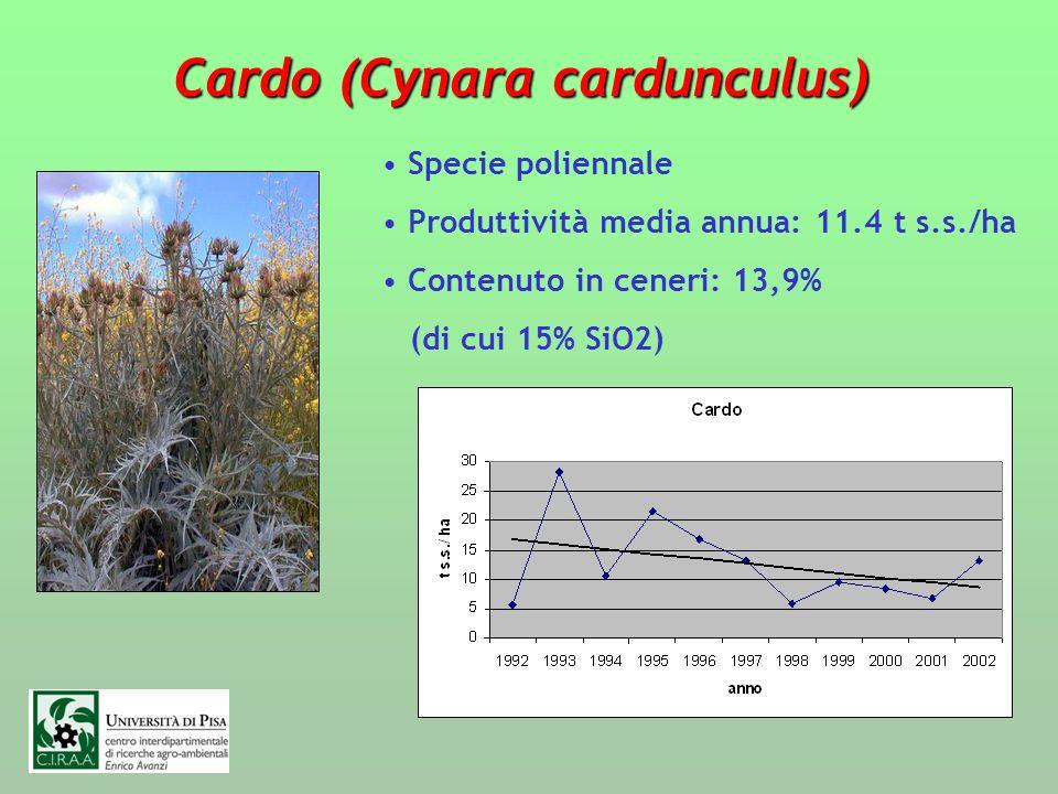 Cardo (Cynara cardunculus) Specie poliennale Produttività media annua: 11.4 t s.s./ha Contenuto in ceneri: 13,9% (di cui 15% SiO2)