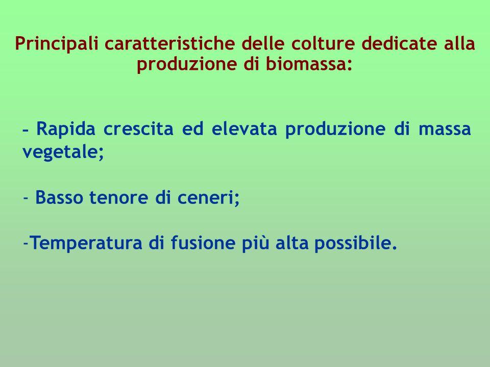 Principali caratteristiche delle colture dedicate alla produzione di biomassa: - Rapida crescita ed elevata produzione di massa vegetale; - Basso teno