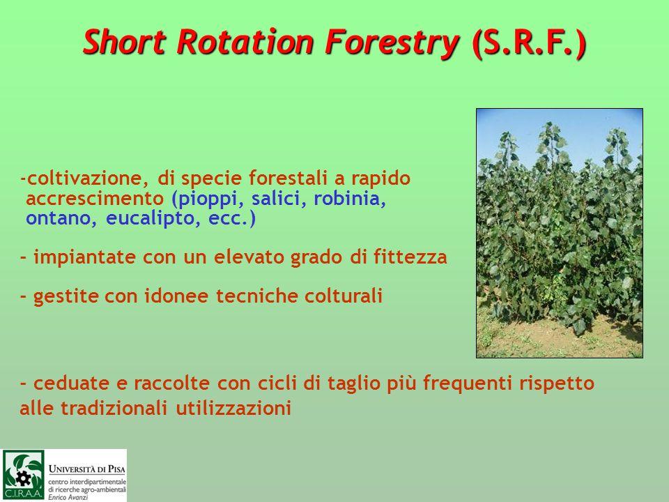 Short Rotation Forestry (S.R.F.) -coltivazione, di specie forestali a rapido accrescimento (pioppi, salici, robinia, ontano, eucalipto, ecc.) - impian