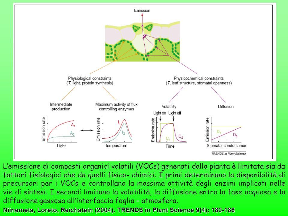 Niinemets, Loreto, Reichstein (2004). TRENDS in Plant Science 9(4): 180-186 Lemissione di composti organici volatili (VOCs) generati dalla pianta è li