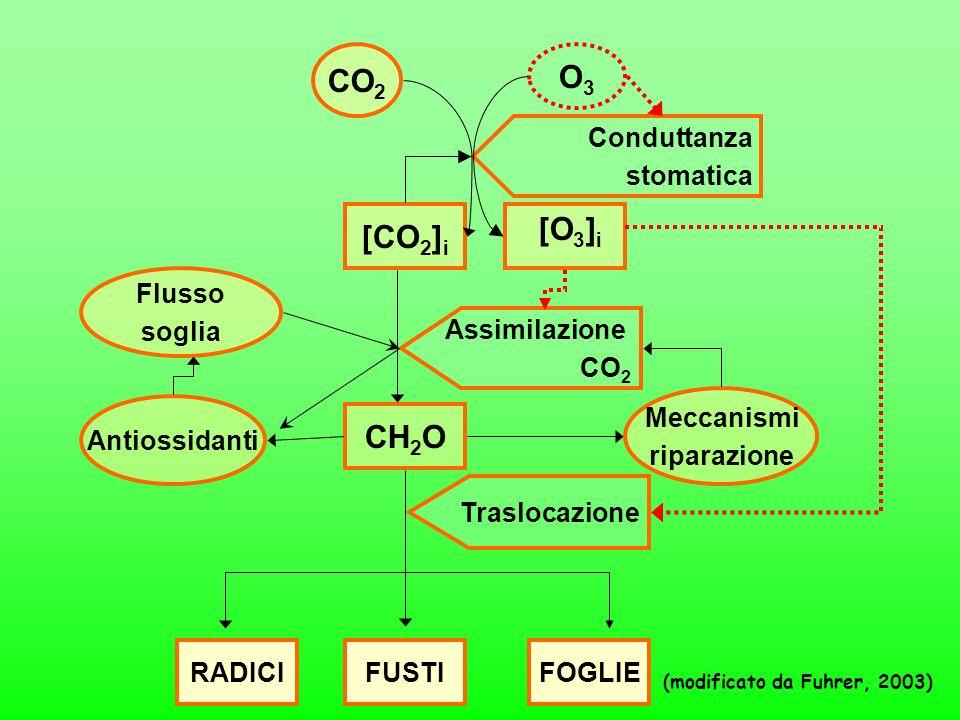 RADICIFUSTIFOGLIE (modificato da Fuhrer, 2003) [CO 2 ] i Assimilazione CO 2 Flusso soglia Antiossidanti CH 2 O Traslocazione CO 2 O3O3 Meccanismi ripa