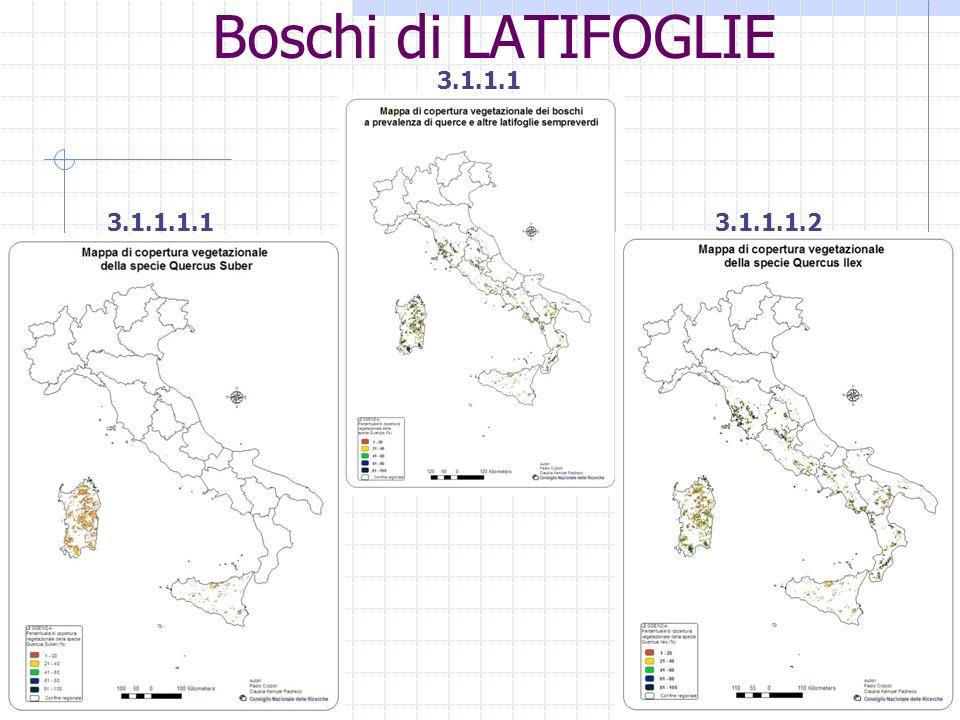 Specie stimati: LATIFOGLIE 1.-Quercus suber (sughera) 2.-Quercus ilex (leccio) 3.-Quercus petraea, quercus pubescens e quercus robur (rovere, roverella e farnia) 4.-Carpinus betulus (carpino nero) 5.-Castanea sativa (castagno) 6.-Fagus sylvativa (faggio) CONIFERE 7.-Pinus sylvestris (pino silvestre) 8.-Abies alba (abete bianco) 9.-Picea abies (abete rosso) 10.-Larix decidua, pinus cembra (larice, pino cembro) ARBORICOLTURA DA LEGNO 11.-Eucalitteti 12.-Pioppicoltura LATIFOGLIE 1.-Quercus cerris, quercus frainetto, quercus trojana e quercus macrolepis (cerrete, farnetto, fragno e vallonea) 2.-Fraxinus excelsior (frassino) CONIFERE 3.-Pino domestico (pinus pinea) 4.-Pino marittimo e daleppo (pinus pinaster e halapensis) 5.-Pinus nigra (pino nero) Specie per stimare: Stima giornaliera dellemissioni di BVOC.