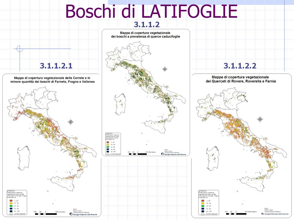 Boschi di LATIFOGLIE 3.1.1.3 3.1.1.3.13.1.1.3.2 Boschi misti a prevalenza di altre latifoglie autoctone
