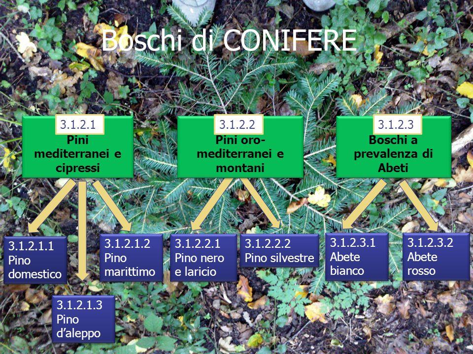Boschi di CONIFERE 3.1.2.1 3.1.2.1.13.1.2.1.33.1.2.1.2 Pini mediterranei e cipressi