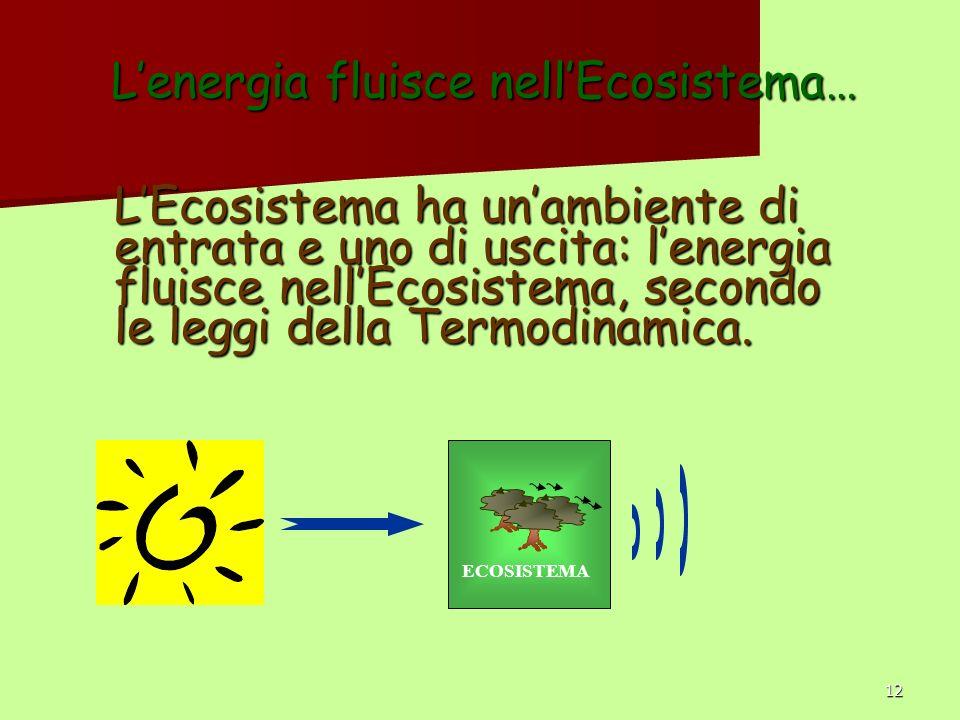 12 Lenergia fluisce nellEcosistema… LEcosistema ha unambiente di entrata e uno di uscita: lenergia fluisce nellEcosistema, secondo le leggi della Termodinamica.