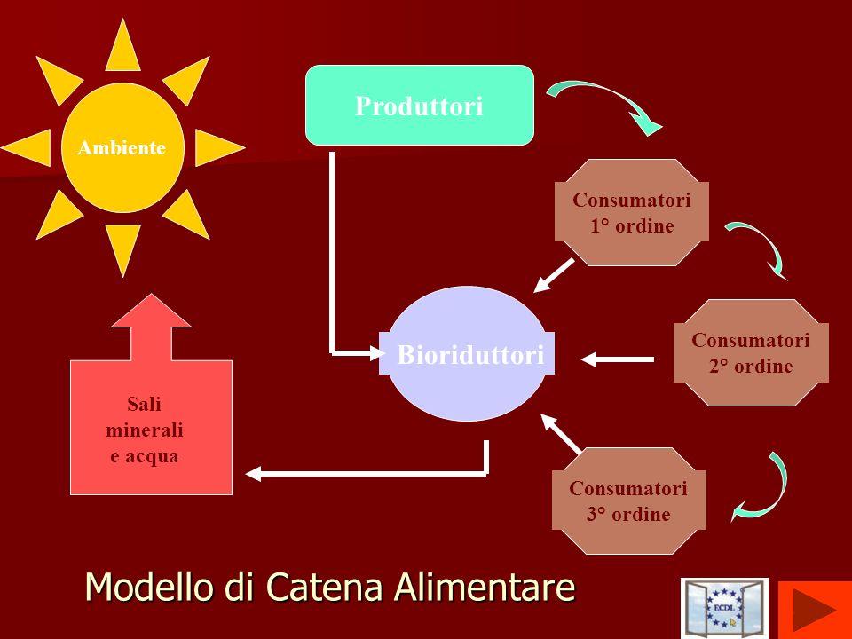 14 Ambiente Produttori Consumatori 1° ordine Consumatori 2° ordine Consumatori 3° ordine Bioriduttori Sali minerali e acqua Modello di Catena Alimenta