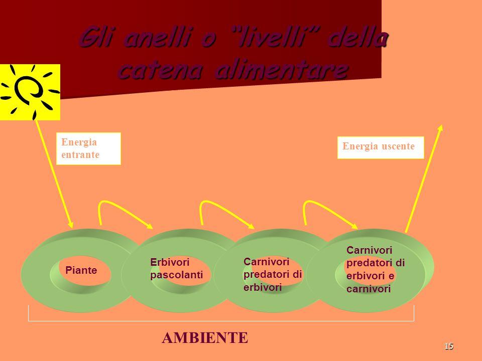 15 Gli anelli o livelli della catena alimentare Energia entrante Energia uscente Piante Erbivori pascolanti Carnivori predatori di erbivori Carnivori predatori di erbivori e carnivori AMBIENTE