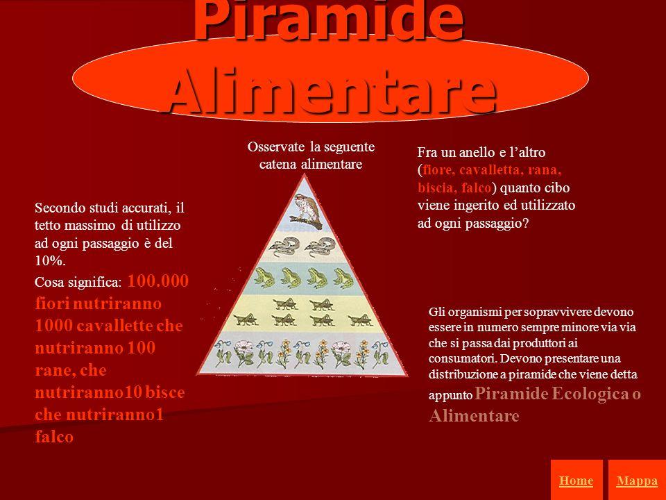 18 Piramide Alimentare Osservate la seguente catena alimentare Fra un anello e laltro (fiore, cavalletta, rana, biscia, falco) quanto cibo viene ingerito ed utilizzato ad ogni passaggio.