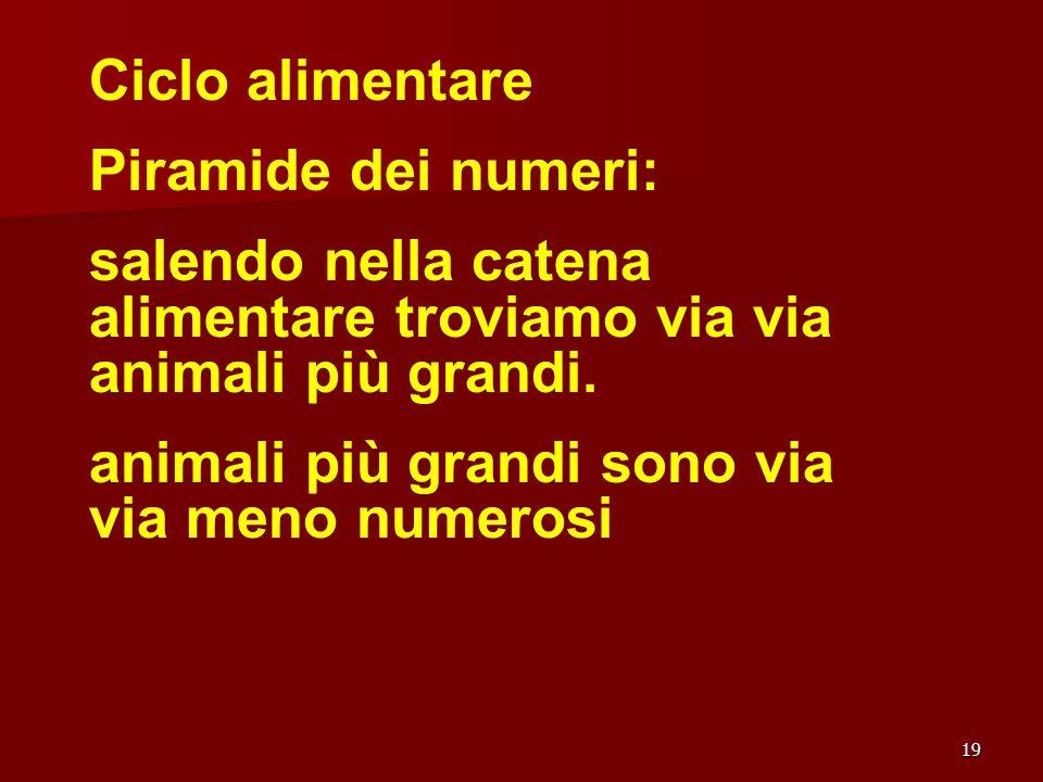 19 Ciclo alimentare Piramide dei numeri: salendo nella catena alimentare troviamo via via animali più grandi. animali più grandi sono via via meno num