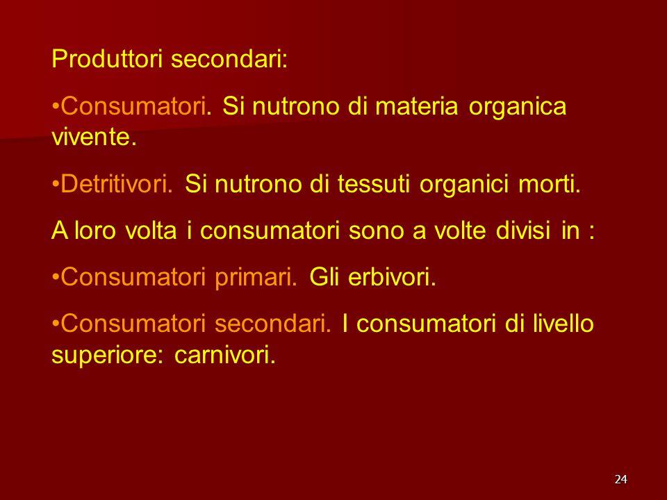 24 Produttori secondari: Consumatori. Si nutrono di materia organica vivente. Detritivori. Si nutrono di tessuti organici morti. A loro volta i consum