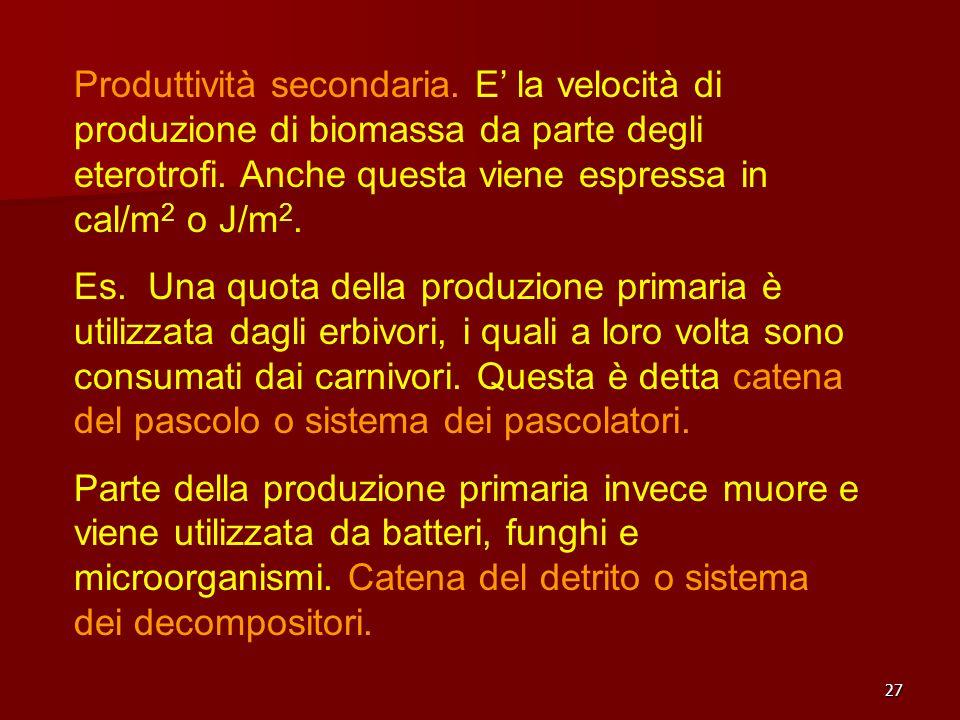 27 Produttività secondaria. E la velocità di produzione di biomassa da parte degli eterotrofi. Anche questa viene espressa in cal/m 2 o J/m 2. Es. Una