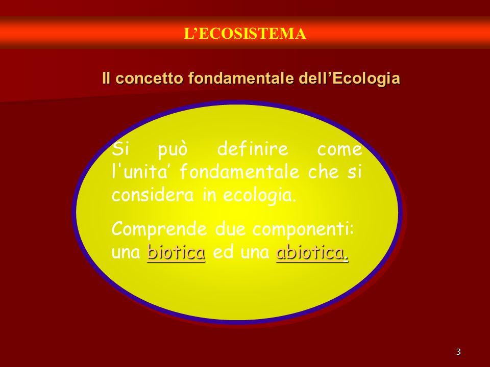 3 LECOSISTEMA Il concetto fondamentale dellEcologia Si può definire come l'unita fondamentale che si considera in ecologia. bioticaabiotica. Comprende