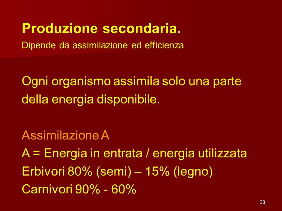 30 Produzione secondaria. Dipende da assimilazione ed efficienza Ogni organismo assimila solo una parte della energia disponibile. Assimilazione A A =