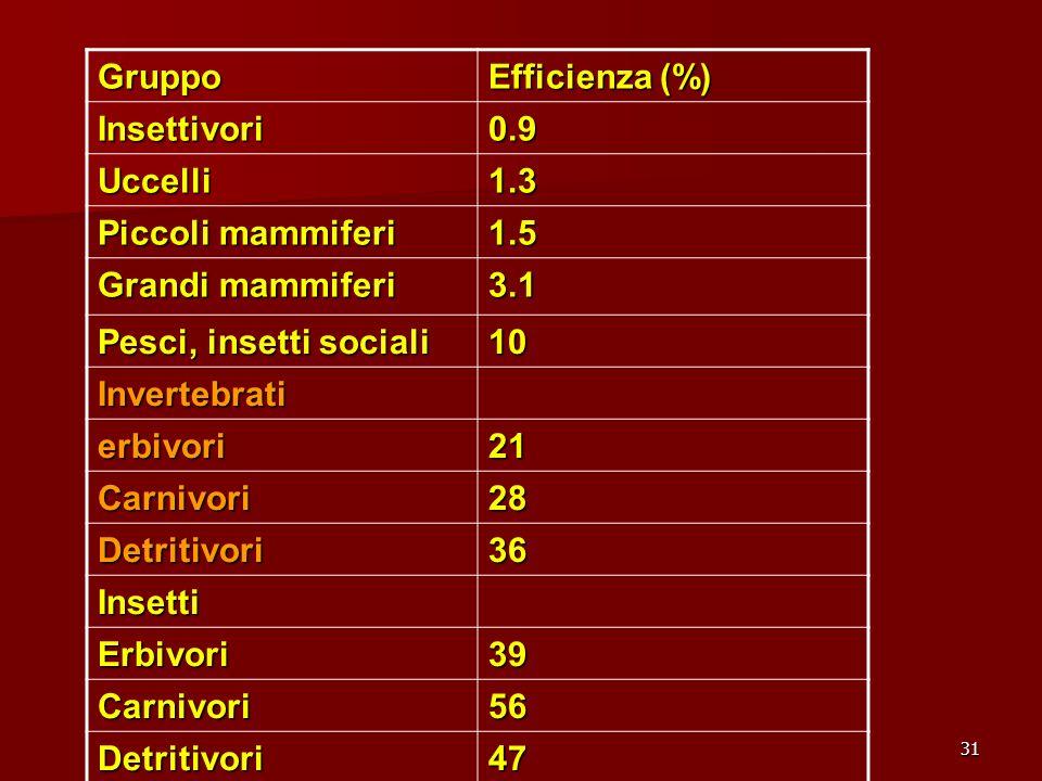 31 Gruppo Efficienza (%) Insettivori0.9 Uccelli1.3 Piccoli mammiferi 1.5 Grandi mammiferi 3.1 Pesci, insetti sociali 10 Invertebrati erbivori21 Carniv
