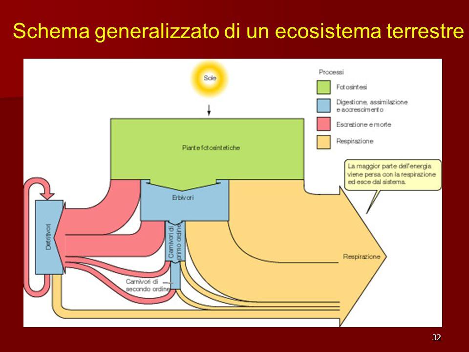 32 Schema generalizzato di un ecosistema terrestre