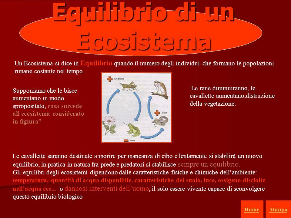 33 Equilibrio di un Ecosistema Un Ecosistema si dice in Equilibrio quando il numero degli individui che formano le popolazioni rimane costante nel tem