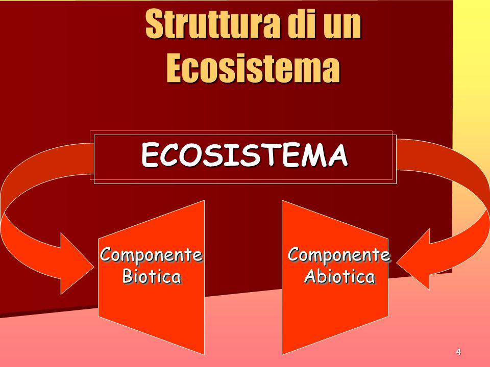 4 Struttura di un Ecosistema ECOSISTEMA Componente Biotica Componente Abiotica