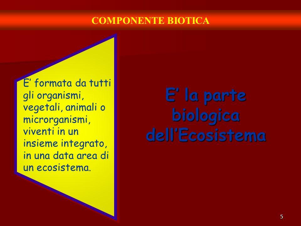 5 COMPONENTE BIOTICA E la parte biologica dellEcosistema E formata da tutti gli organismi, vegetali, animali o microrganismi, viventi in un insieme integrato, in una data area di un ecosistema.