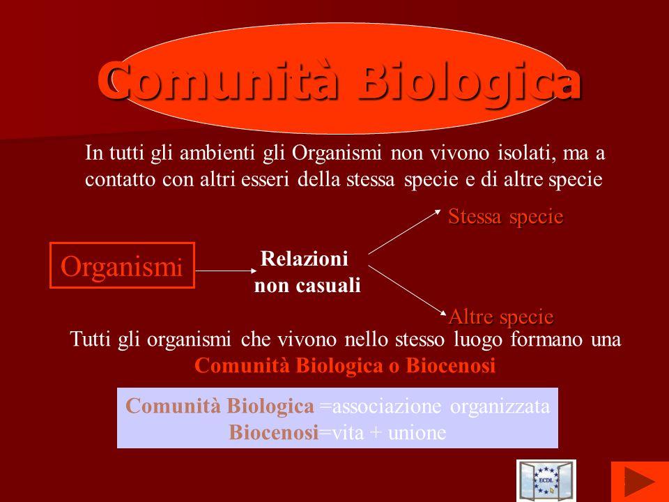 7 Comunità Biologica In tutti gli ambienti gli Organismi non vivono isolati, ma a contatto con altri esseri della stessa specie e di altre specie Orga