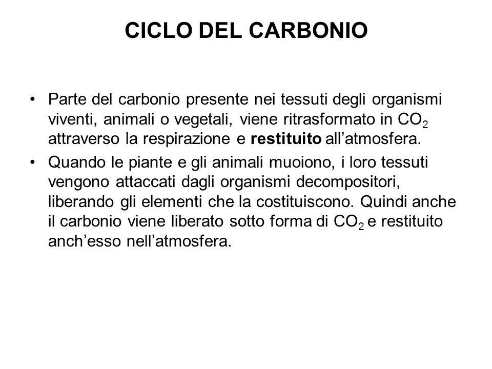 CICLO DEL CARBONIO Parte del carbonio presente nei tessuti degli organismi viventi, animali o vegetali, viene ritrasformato in CO 2 attraverso la respirazione e restituito allatmosfera.