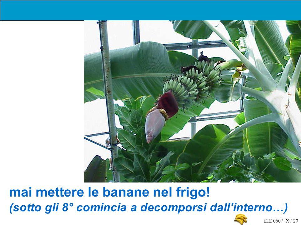 EIE 0607 X / 20 mai mettere le banane nel frigo! (sotto gli 8° comincia a decomporsi dallinterno…)