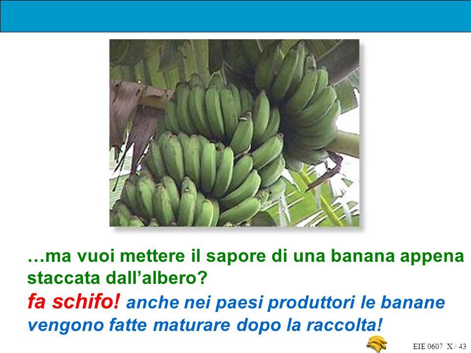 EIE 0607 X / 43 …ma vuoi mettere il sapore di una banana appena staccata dallalbero? fa schifo! anche nei paesi produttori le banane vengono fatte mat