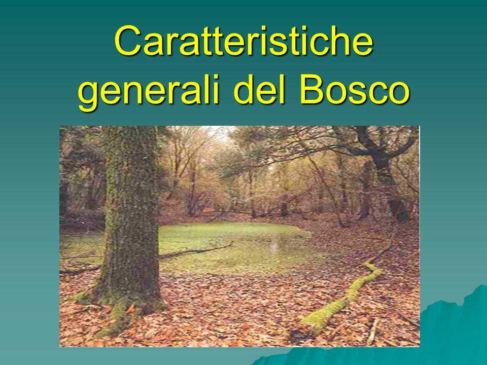 Caratteristiche generali del Bosco