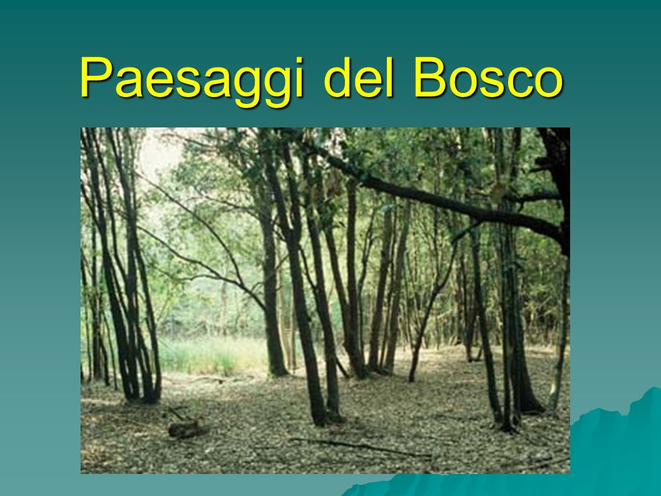 Paesaggi del Bosco