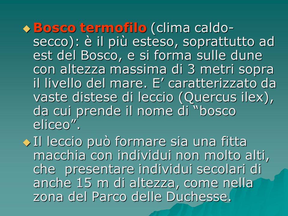 Bosco termofilo (clima caldo- secco): è il più esteso, soprattutto ad est del Bosco, e si forma sulle dune con altezza massima di 3 metri sopra il liv