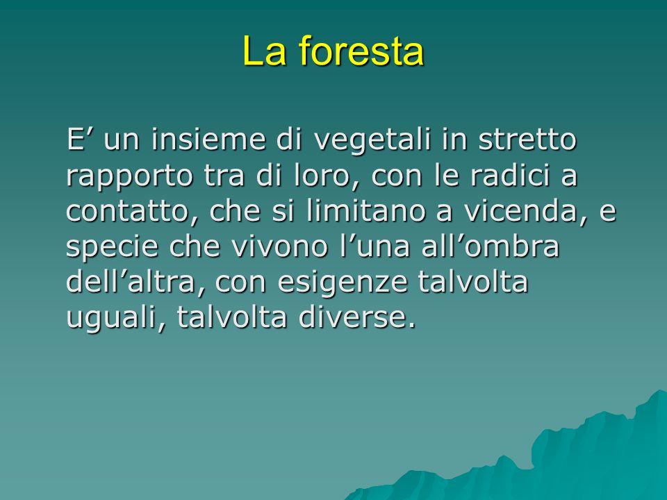La foresta E un insieme di vegetali in stretto rapporto tra di loro, con le radici a contatto, che si limitano a vicenda, e specie che vivono luna all