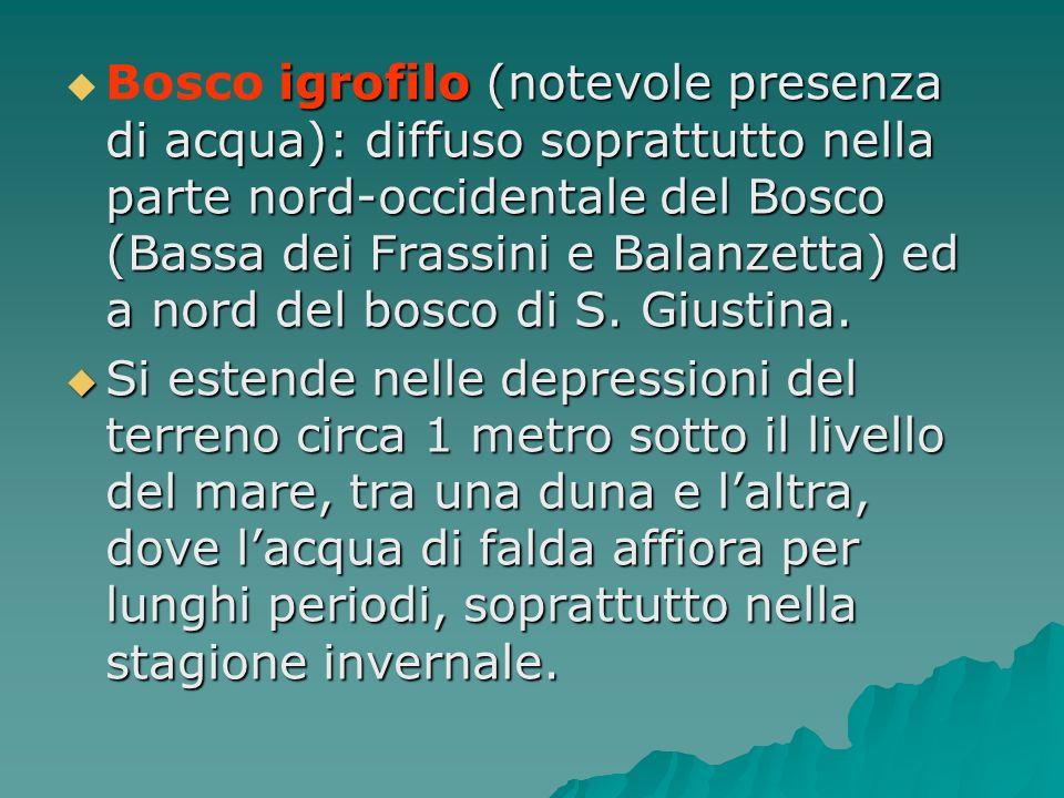 igrofilo (notevole presenza di acqua): diffuso soprattutto nella parte nord-occidentale del Bosco (Bassa dei Frassini e Balanzetta) ed a nord del bosc