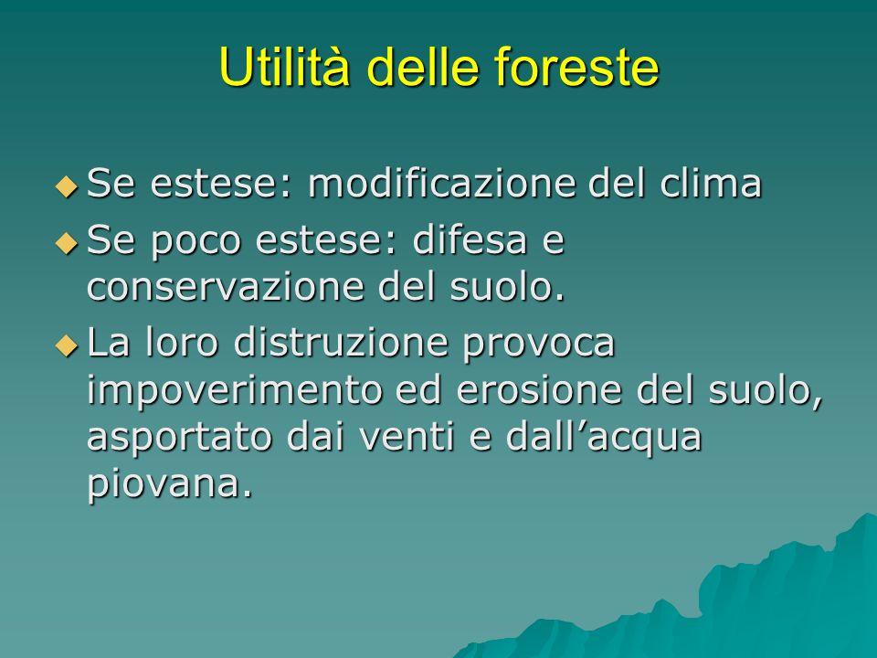 Utilità delle foreste Se estese: modificazione del clima Se estese: modificazione del clima Se poco estese: difesa e conservazione del suolo. Se poco