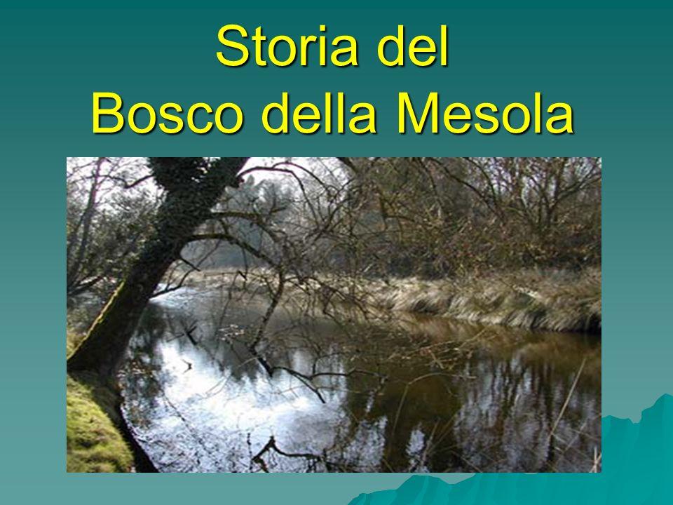 Storia del Bosco della Mesola