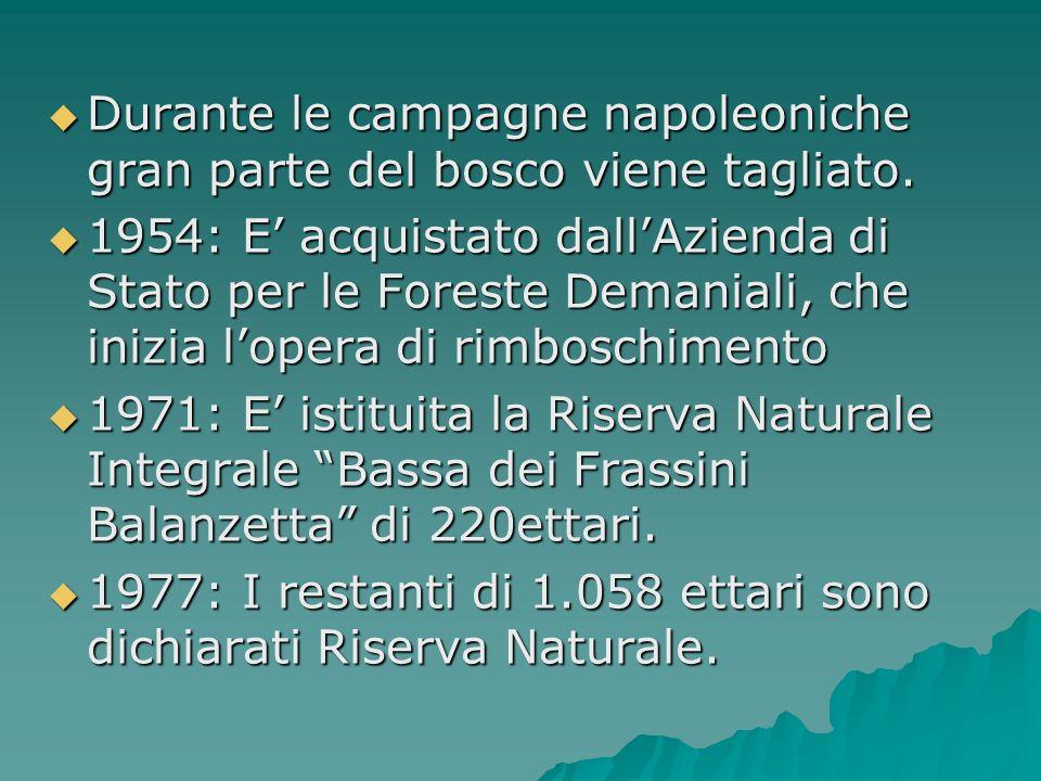 Durante le campagne napoleoniche gran parte del bosco viene tagliato. Durante le campagne napoleoniche gran parte del bosco viene tagliato. 1954: E ac