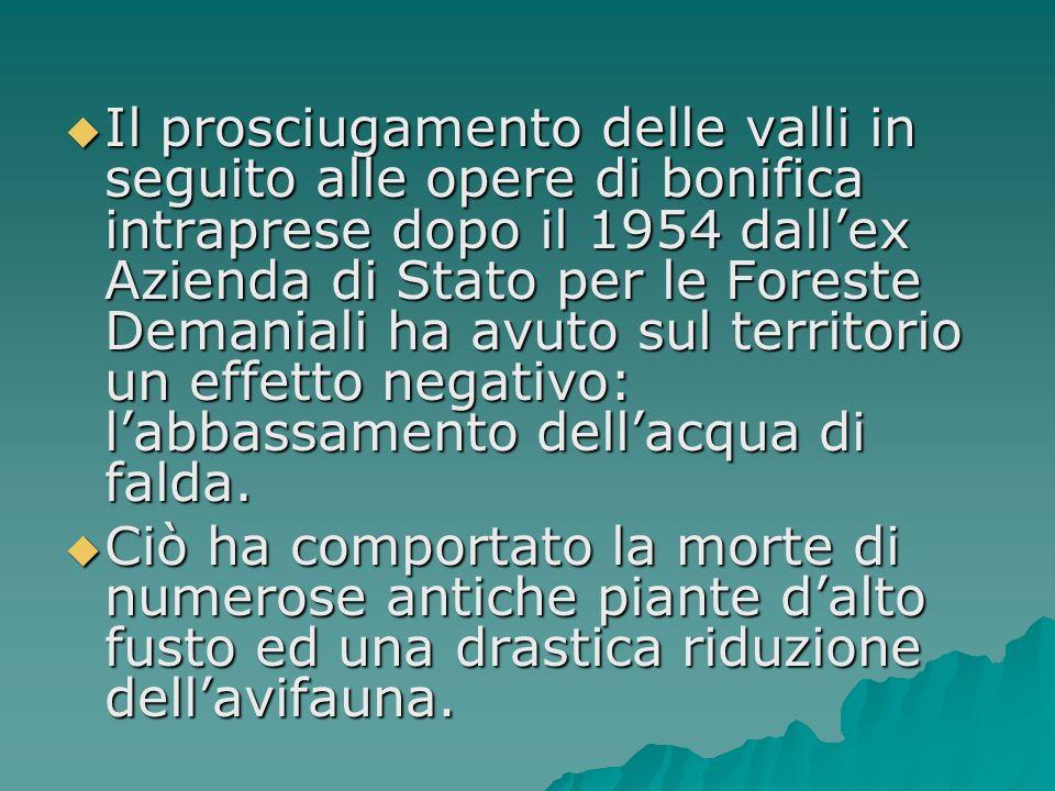 Il prosciugamento delle valli in seguito alle opere di bonifica intraprese dopo il 1954 dallex Azienda di Stato per le Foreste Demaniali ha avuto sul