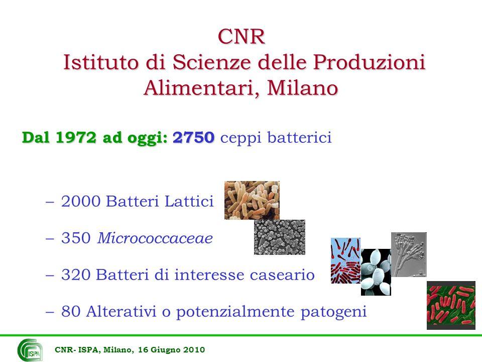 CNR Istituto di Scienze delle Produzioni Alimentari, Milano Dal 1972 ad oggi: 2750 Dal 1972 ad oggi: 2750 ceppi batterici –2000 Batteri Lattici –350 M
