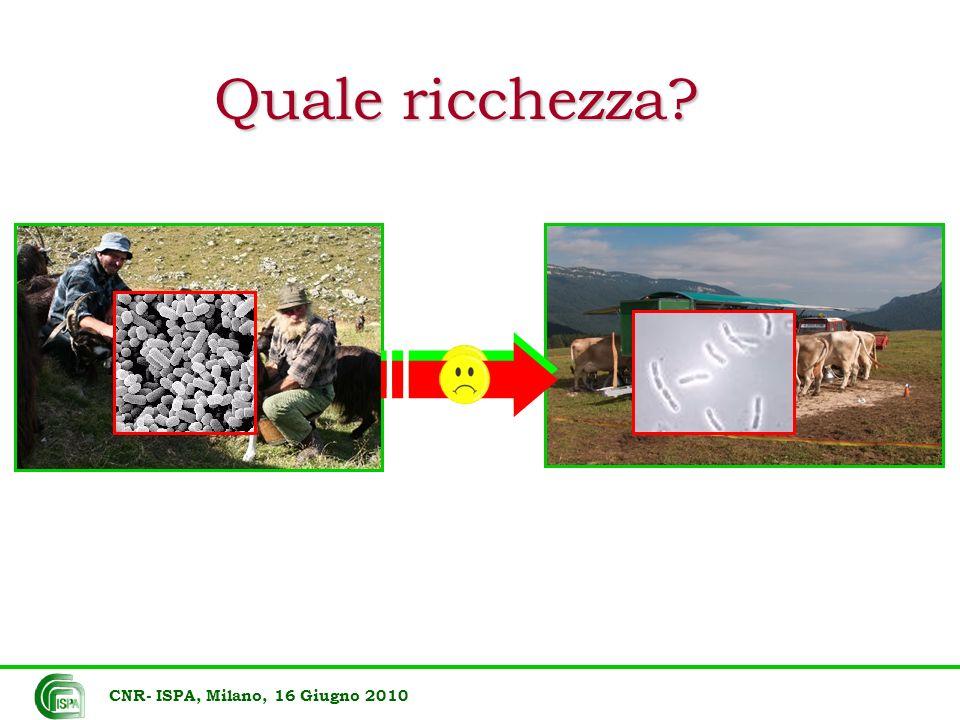 Oggi in Italia CEPIM WDCM2 13 Centro per gli Enterobatteri Patogeni per l Italia Meridionale CIMSC WDCM4 24 Collezione Instituto di Microbiologia CRA- COLMI A WDCM9 45 COLMIA Collezione di microrganismi di interesse agrario, industriale ed ambientale CSC-CLCH WDCM6 31 Centro Substrati Cellulari: Cell Lines Collection and Hybridomas CSMA WDCM1 47 Centro di Studio dei Microorganismi Autotrofi - CNR DBVPG WDCM1 80 Industrial Yeasts Collection MUT WDCM9 24 Mycotheca Universitatis Taurinensis NCB WDCM1 75 National Culture Bank RV WDCM4 21 Collection of Leptospira Strains CNR- ISPA, Milano, 16 Giugno 2010 245