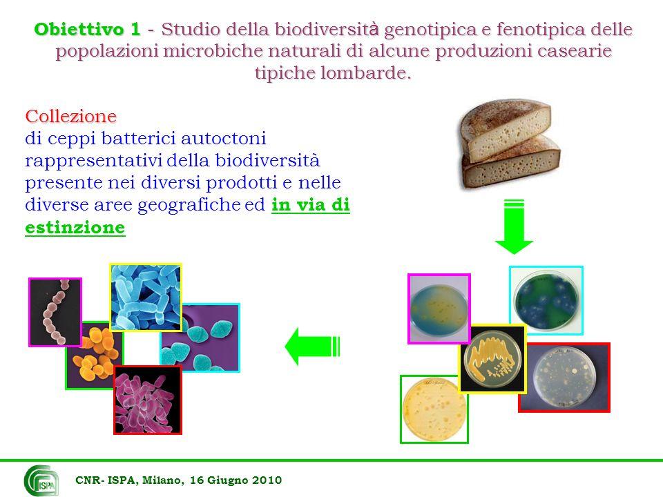 Collezione di ceppi batterici autoctoni rappresentativi della biodiversità presente nei diversi prodotti e nelle diverse aree geografiche ed in via di