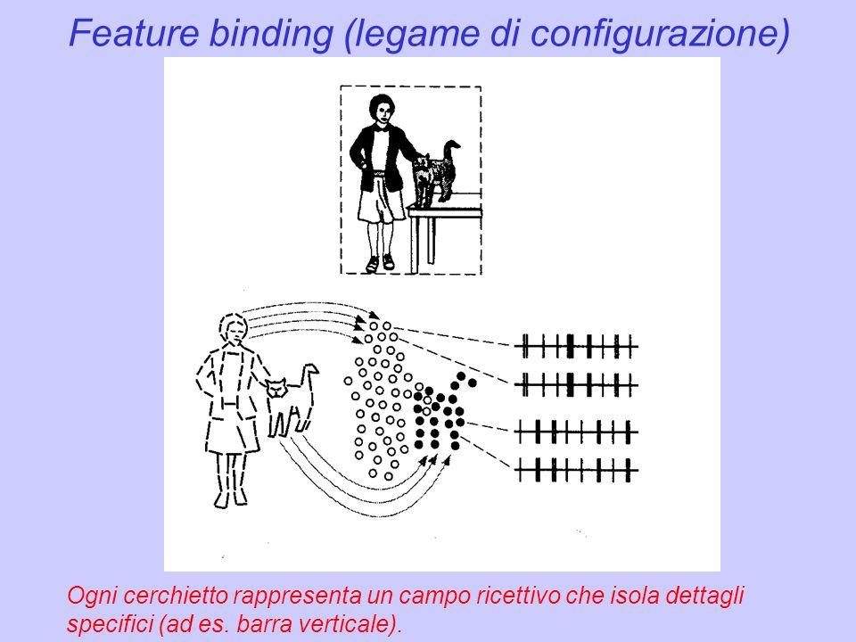 Feature binding (legame di configurazione) Ogni cerchietto rappresenta un campo ricettivo che isola dettagli specifici (ad es. barra verticale).