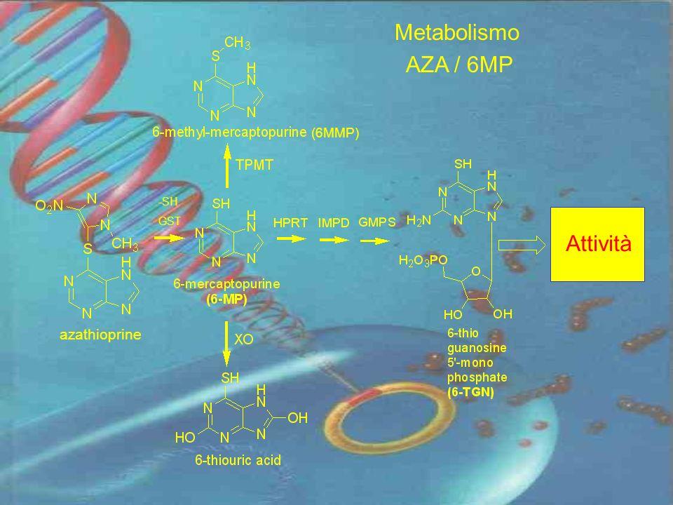 Metabolismo AZA / 6MP -SH GST Attività azathioprine (6MMP)