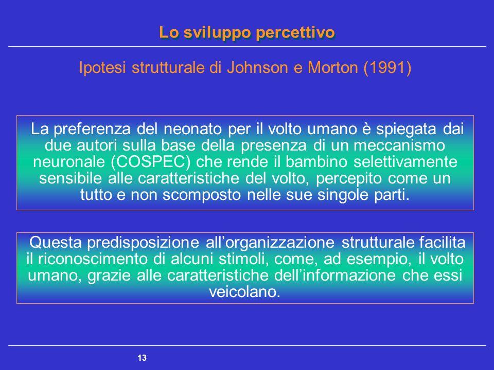 Lo sviluppo percettivo 13 Ipotesi strutturale di Johnson e Morton (1991) La preferenza del neonato per il volto umano è spiegata dai due autori sulla