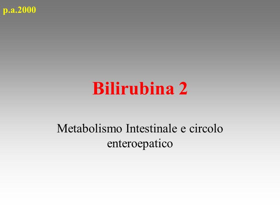 Bilirubina 2 Metabolismo Intestinale e circolo enteroepatico p.a.2000