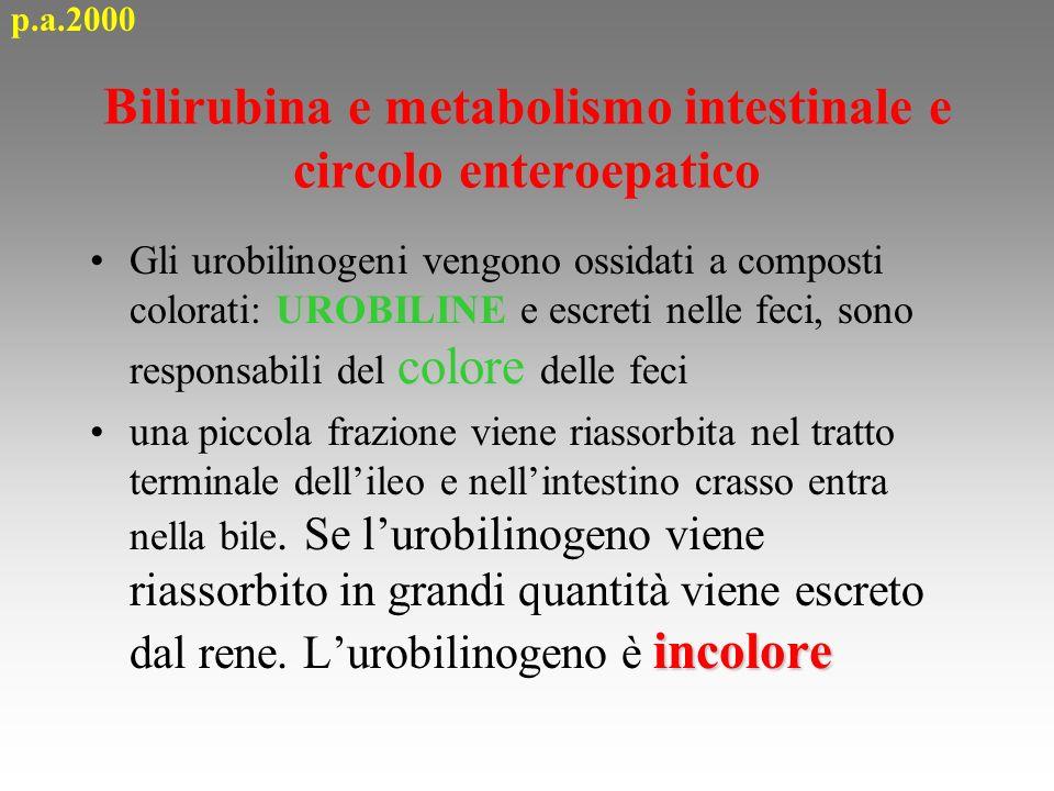Bilirubina e metabolismo intestinale e circolo enteroepatico coloreGli urobilinogeni vengono ossidati a composti colorati: UROBILINE e escreti nelle f