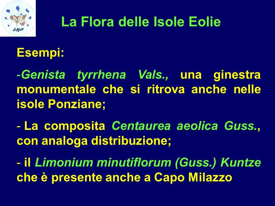 La Flora delle Isole Eolie Esempi: -Genista tyrrhena Vals., una ginestra monumentale che si ritrova anche nelle isole Ponziane; - La composita Centaur
