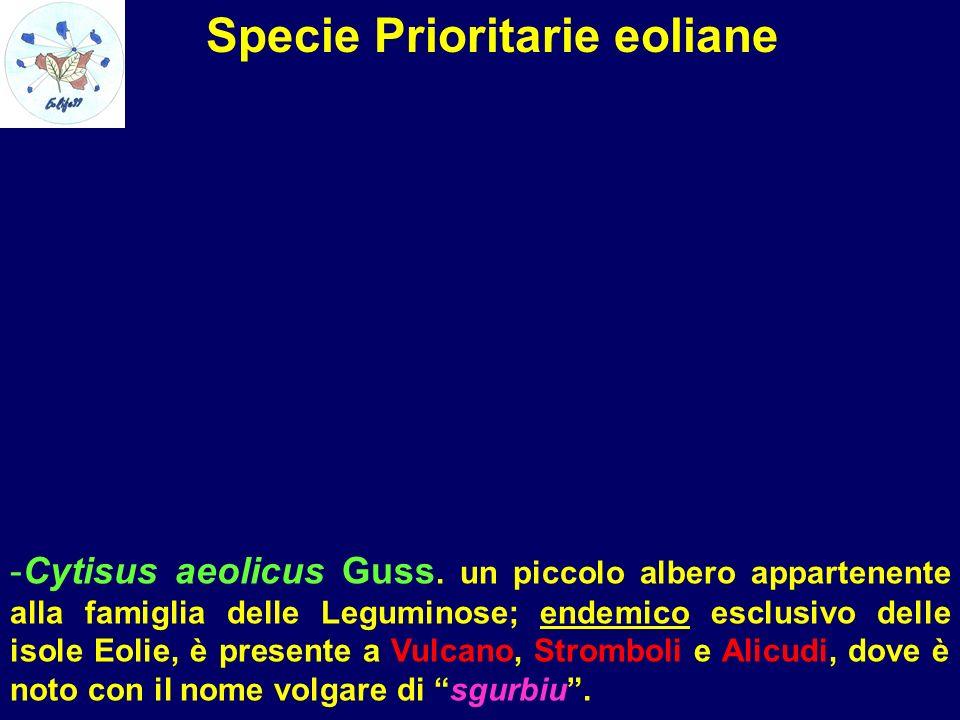 Specie Prioritarie eoliane -Cytisus aeolicus Guss. un piccolo albero appartenente alla famiglia delle Leguminose; endemico esclusivo delle isole Eolie